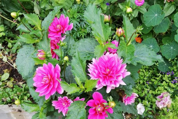 Kuvituskuva puutarhasta ja kukista