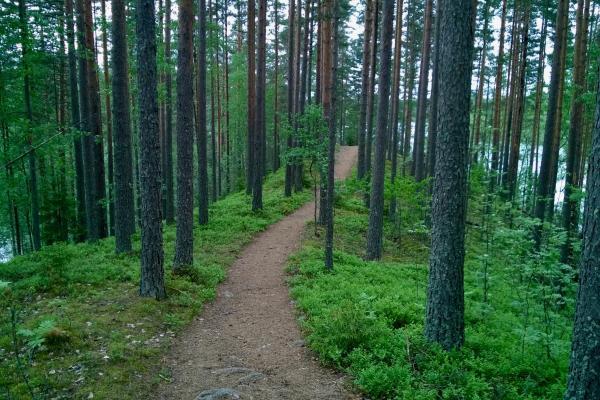 Luontokuva, polku, kevät