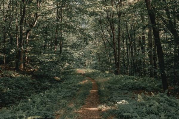 Kuva metsäpolusta