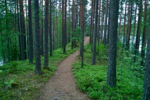Luonto- ja ympäristöalan perustutkinnolle uudet perusteet
